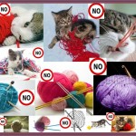 No On Kittens And Needles And Yarn